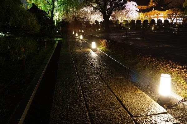 東寺夜桜003