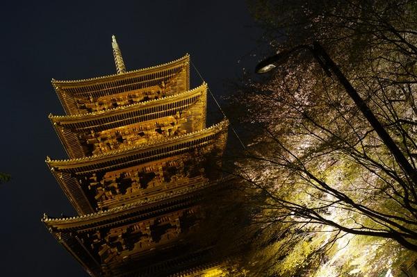東寺夜桜016