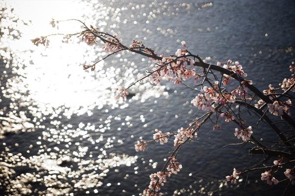 春の到来001