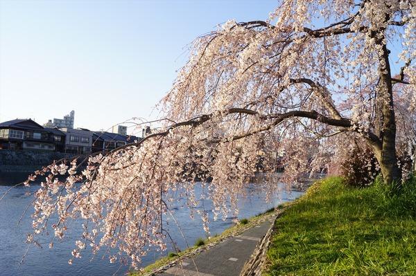 春の到来003