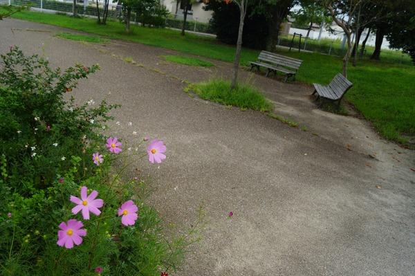 中二恋*公園010