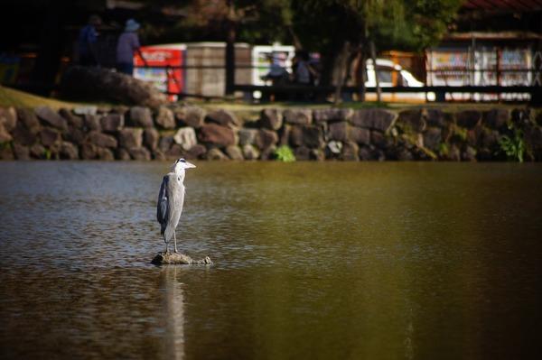奈良公園004