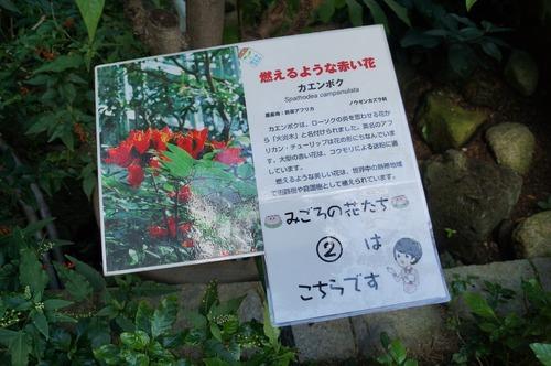 咲くやこの花館012
