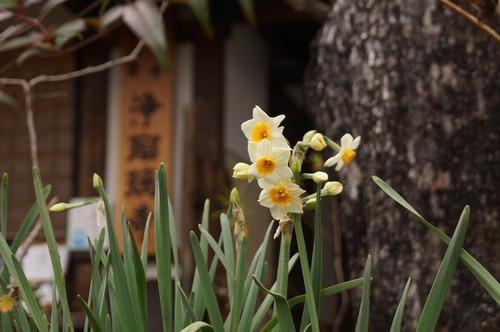 浄瑠璃寺026