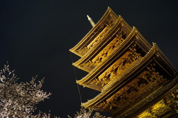 東寺夜桜014
