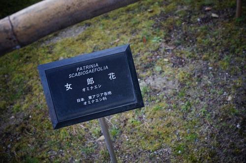 松花堂庭園049