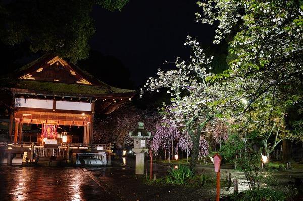 平野神社004