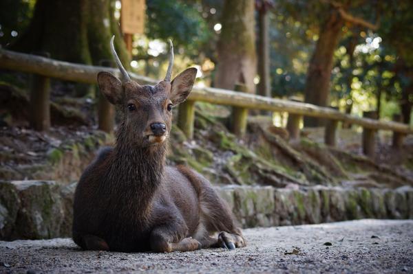 奈良公園016