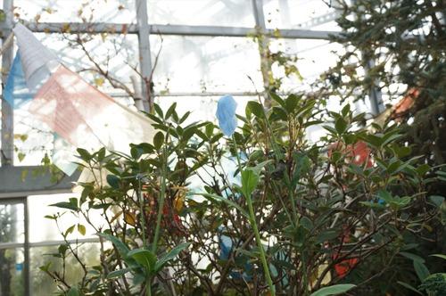 咲くやこの花館039