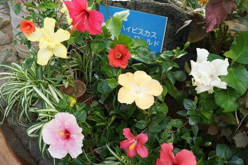 咲くやこの花館014