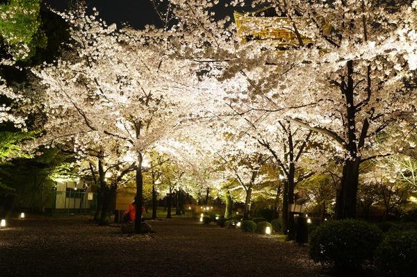 東寺夜桜012