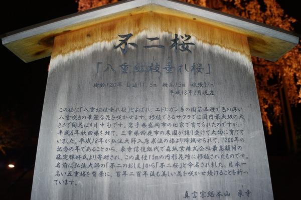 東寺夜桜020