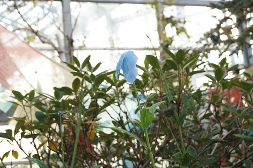 咲くやこの花館038