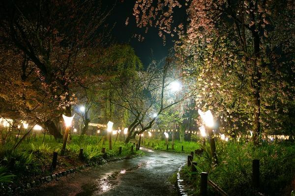 平野神社011