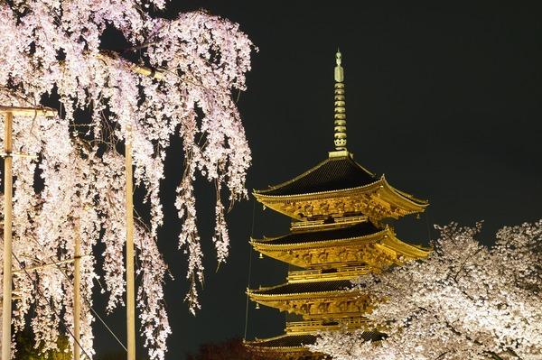 東寺夜桜018