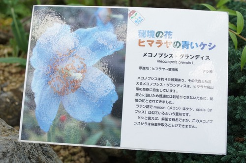 咲くやこの花館036