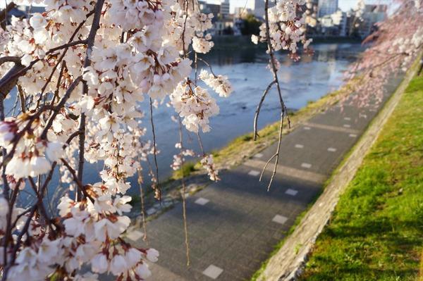 春の到来004