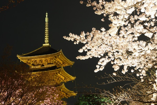 東寺夜桜008