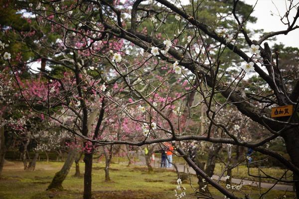 金沢風景038