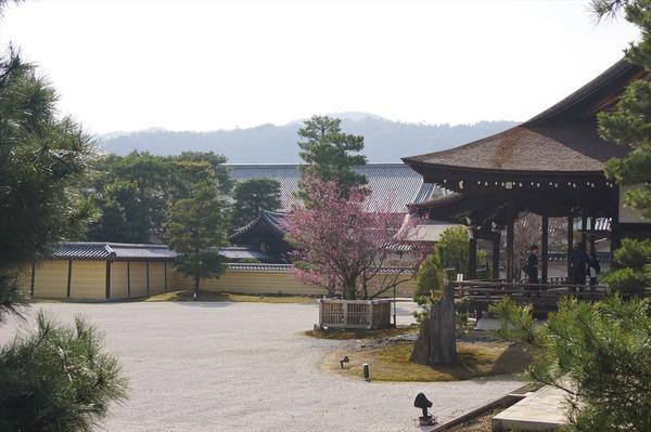 大覚寺026