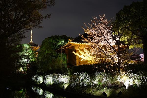 東寺夜桜002