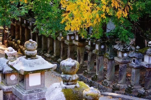 奈良公園030