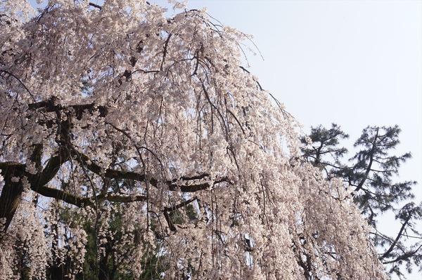 京都御苑001