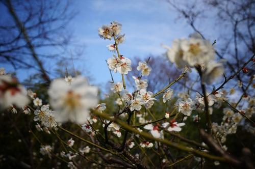 松花堂庭園036