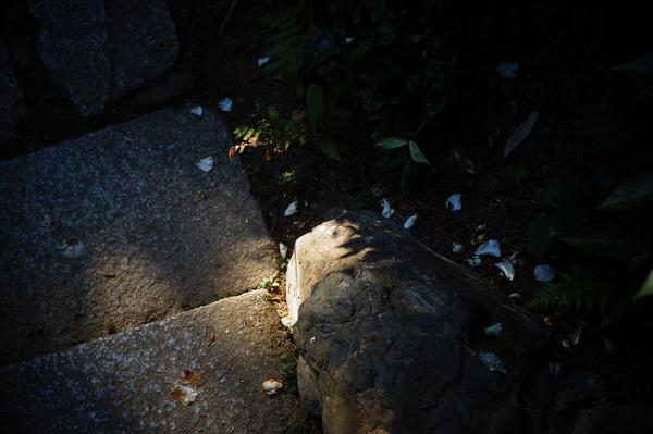 金福寺022