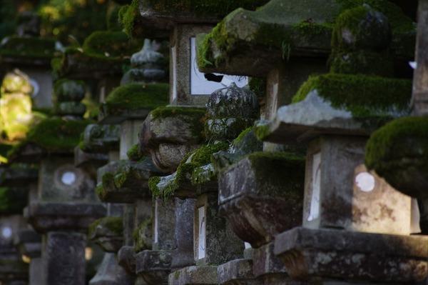 奈良公園023