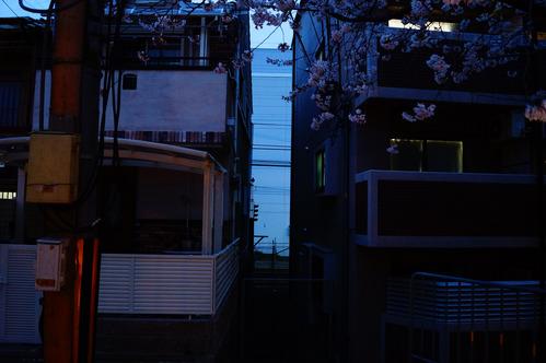 tamakoma_b011