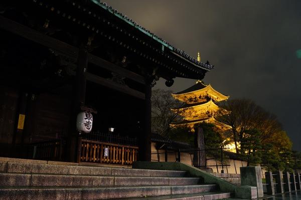 東寺夜桜001