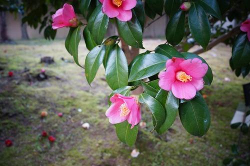 松花堂庭園059