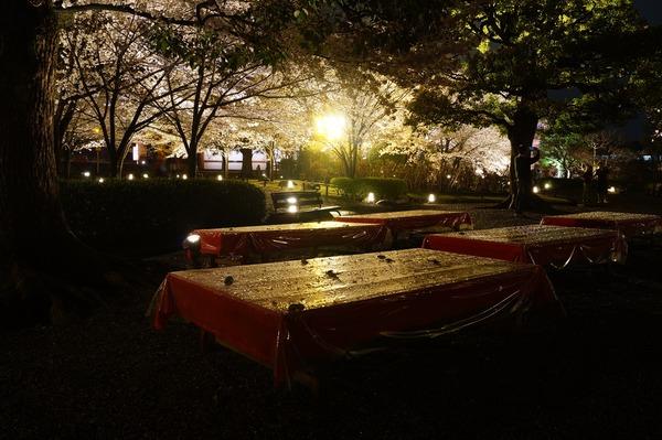 東寺夜桜015