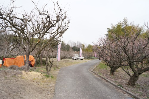 青谷梅林009