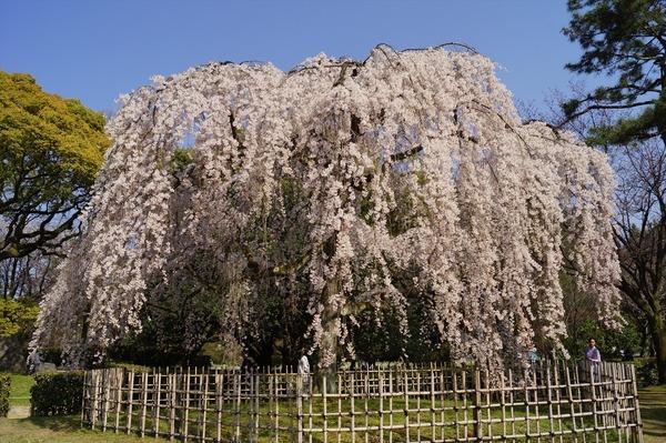 京都御苑003