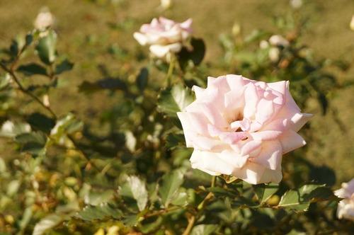 咲くやこの花館020