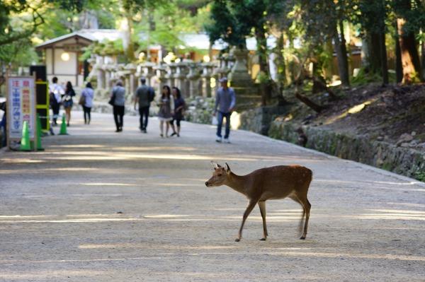 奈良公園031
