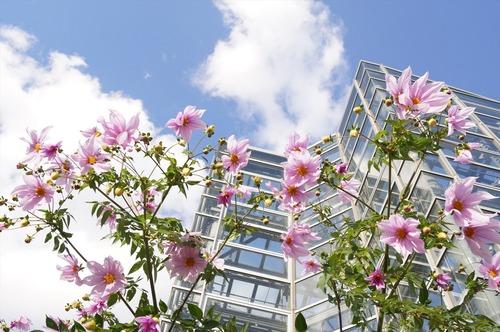 咲くやこの花館024