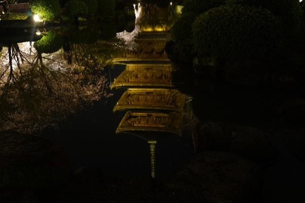 東寺夜桜010