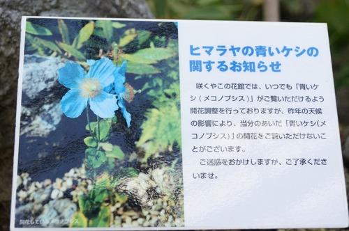 咲くやこの花館037