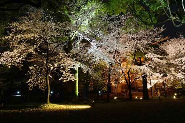 東寺夜桜017