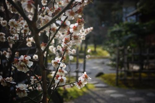 松花堂庭園032