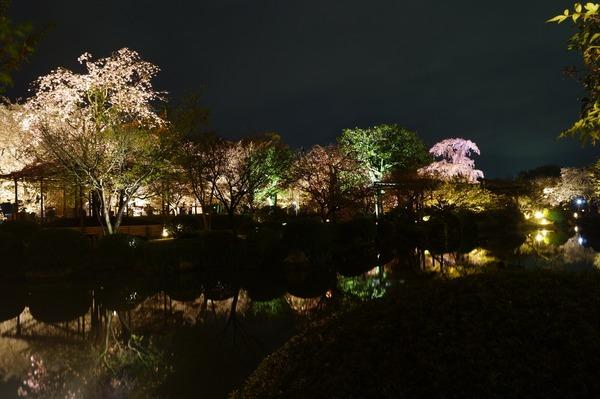 東寺夜桜013