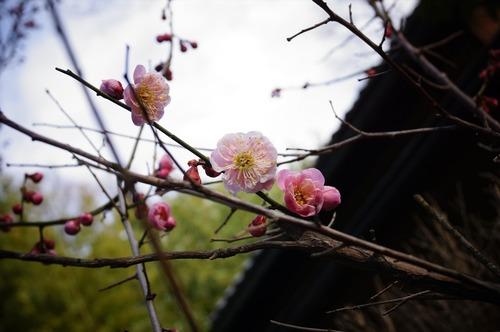 松花堂庭園033
