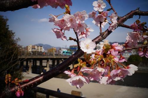 松花堂庭園002