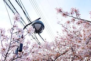 tamakoma_b4