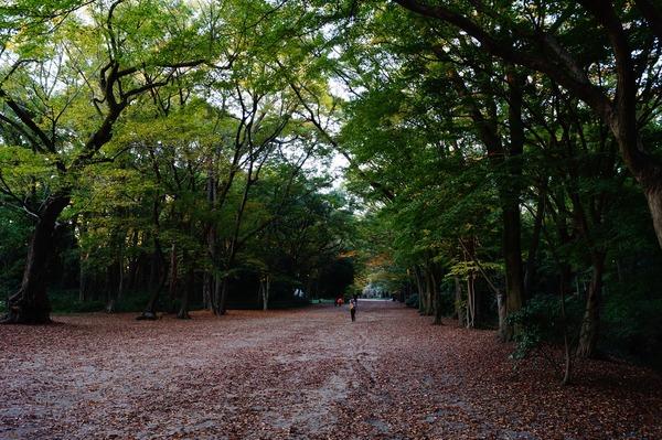 金福寺035