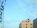 ツバメ飛ぶ723−2