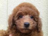 子犬0711140-1